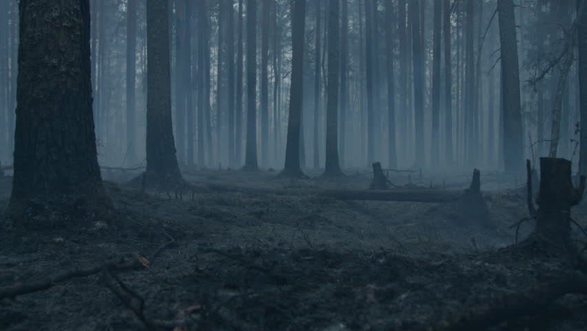 Dark mysterious burned forest landscape. Ash covered forest after fire. Smoke rising from ground after wildfire. | Shutterstock HD Video #1014632858