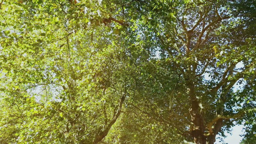 4K Summertime low angle view of a forest, sunbeam through the branches. | Shutterstock HD Video #1014659036