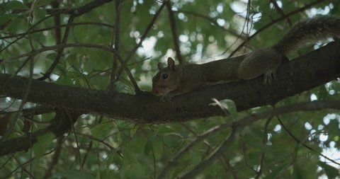 A squirrel looks out from a tree