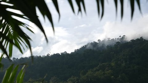 Fog and cloud covering the mountain forests in a nature reserve.