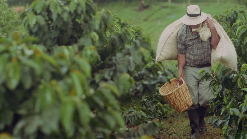 Coffee Farmer Quindio Colombia 01