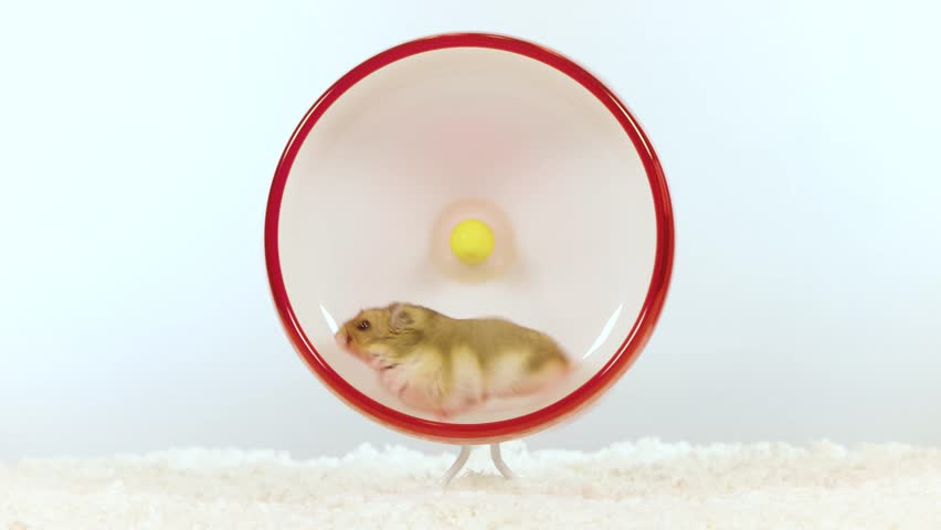 Small brown hamster lays down for rest in wheel