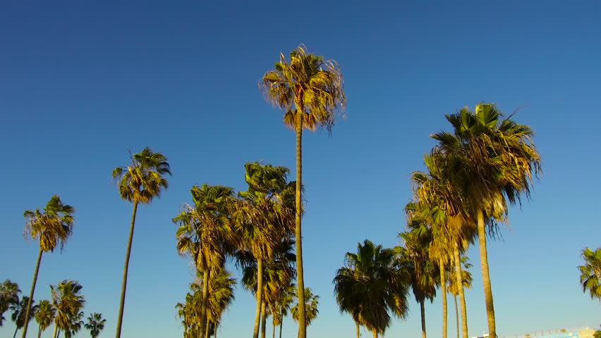 Summer holidays concept - palm trees over blue sky at venice beach, california | Shutterstock HD Video #1014735371