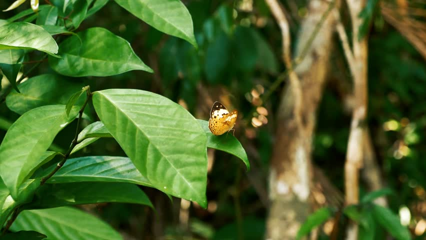 Butterfly closeup. Beautiful colorful butterfly flying into the jungle through the leafs. | Shutterstock HD Video #1014765677