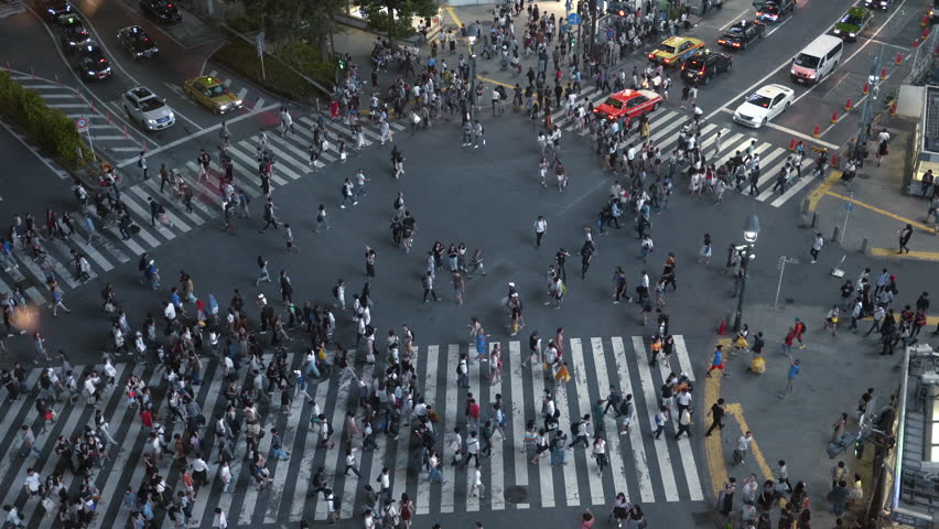 High Angle Shot of the Famous Shibuya Pedestrian Scramble Crosswalk with Crowds of People Crossing and Cars Driving. Evening in the Big City.  | Shutterstock HD Video #1014801542