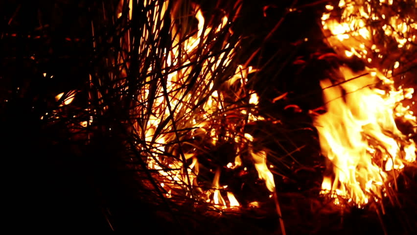 Burning fire at night   Shutterstock HD Video #1014876064