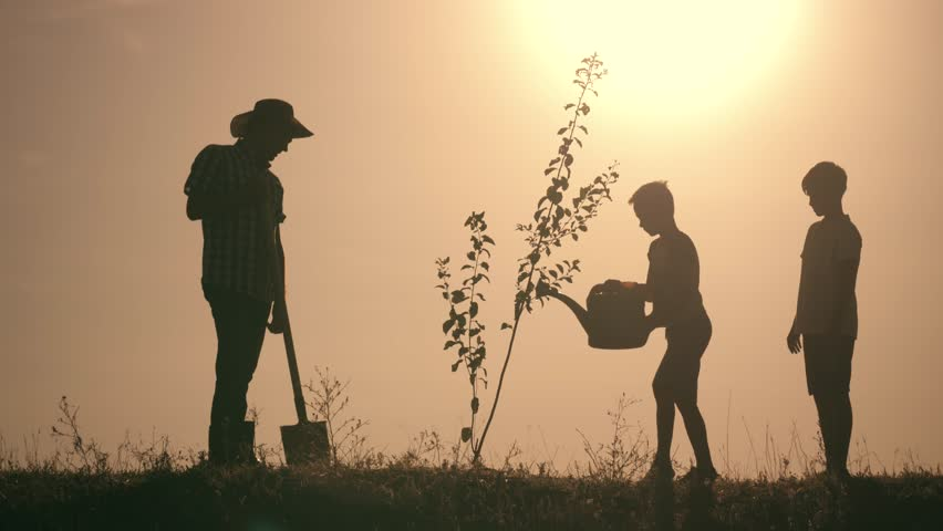 A happy family. Father and two sons plant and water the tree in the park at sunset. The concept of a happy family | Shutterstock HD Video #1014961840