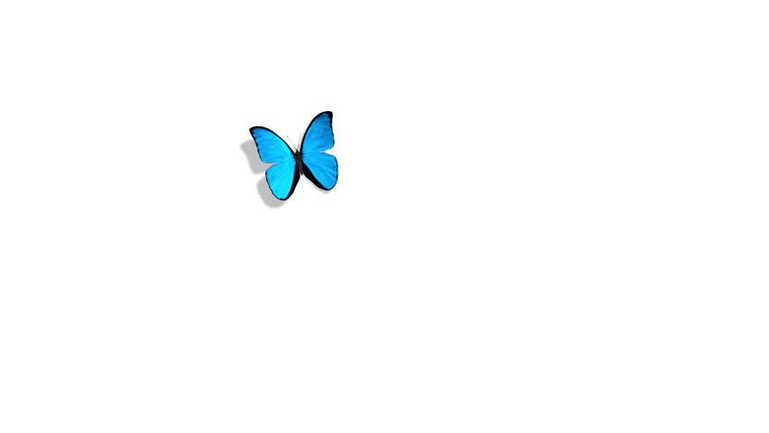 Morpho Menelaus Blue Butterfly Flying on a Green Background. Beautiful 3d animation.