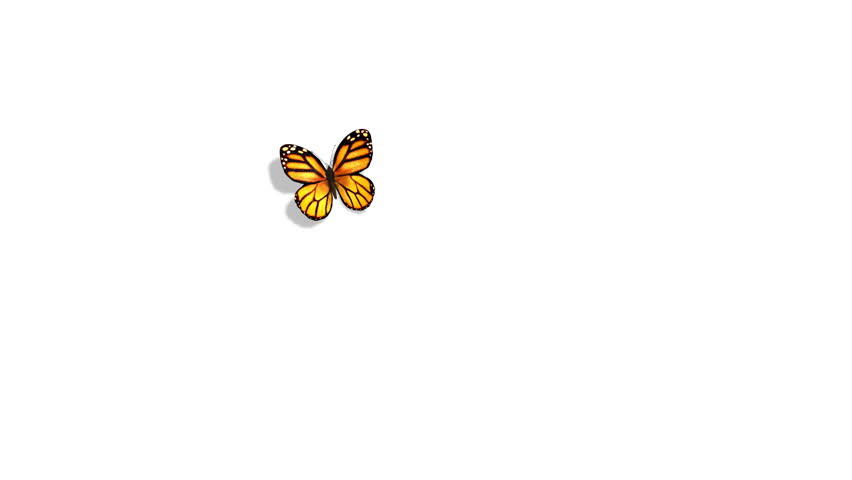Orange Butterfly Flying on a Blue Background. 3d animation.
