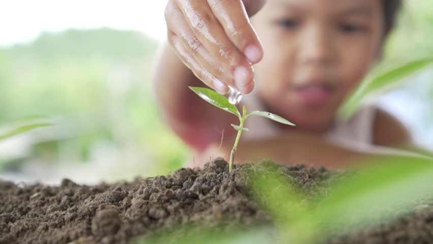 Close up of beautiful girl's hand watering a plant. Concept protecting the earth and environmental conservation. Slow motion shot
