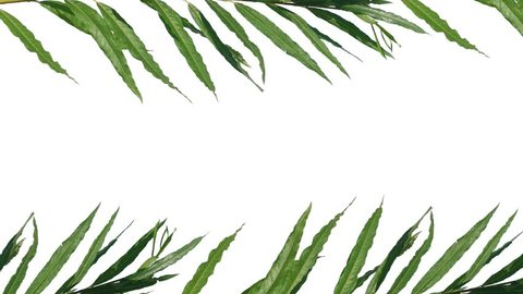 Tropical Palm Leaves Animation Alpha Stock Footage Video 100 Royalty Free 34798339 Shutterstock About 0% of these are decorative flowers a wide variety of animated leaves options are available to you, such as material, occasion, and. tropical palm leaves animation alpha