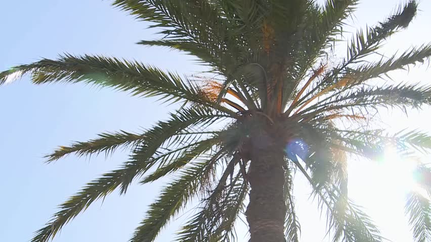 Sun Back Light Date palm tree in north Africa