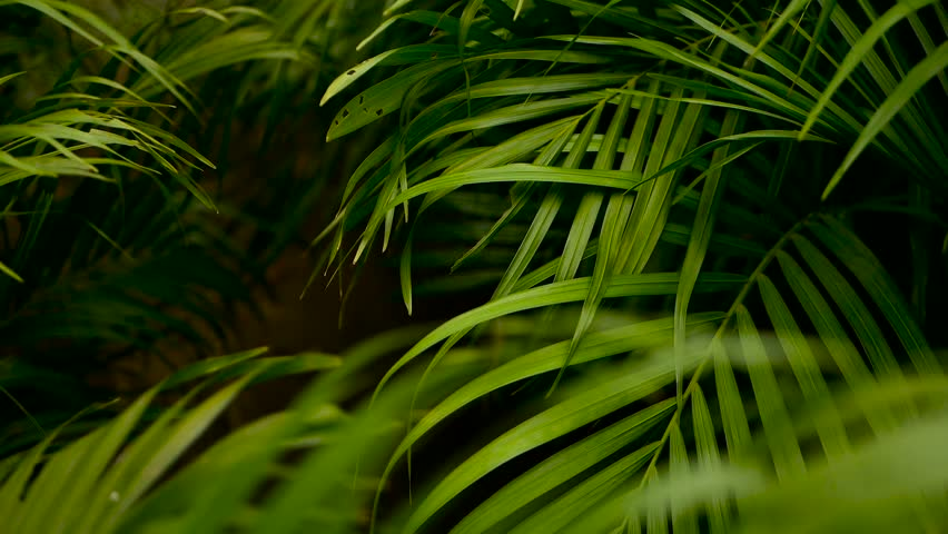 Blur Tropical Green Palm Leaf Stock Footage Video 100 Royalty Free 1015395517 Shutterstock Find the perfect tropical green leaf stock illustrations from getty images. blur tropical green palm leaf stock footage video 100 royalty free 1015395517 shutterstock