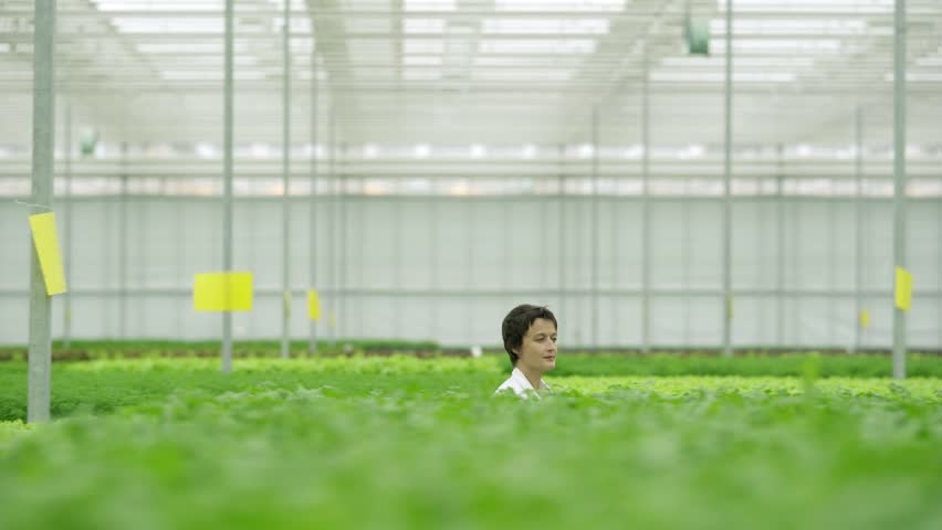 Tracking right shot of female greenhouse technician walking among rows of green plantations and passing by agricultural worker caring for vegetable plants