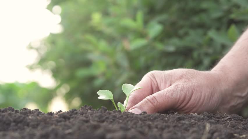 Man planting seedling in garden   Shutterstock HD Video #1015582702