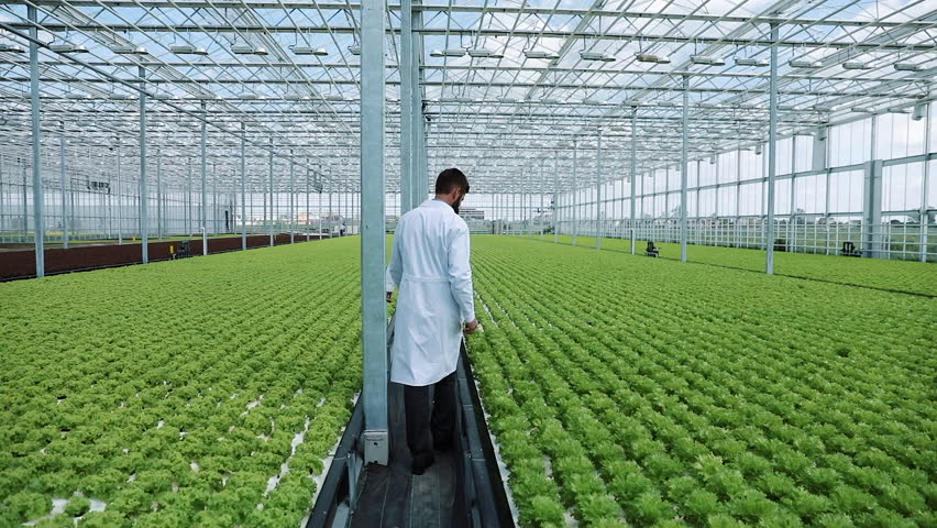 Hydroponics method of growing salad in greenhouse. Two lab assistants examine verdant plant growing. Agricultural industry