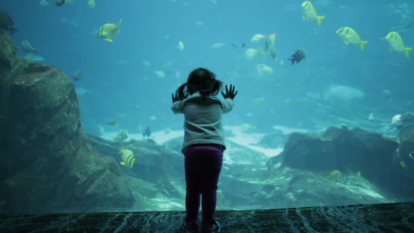 Little Girl in Pigtails at Aquarium watching Fish in Large Tank