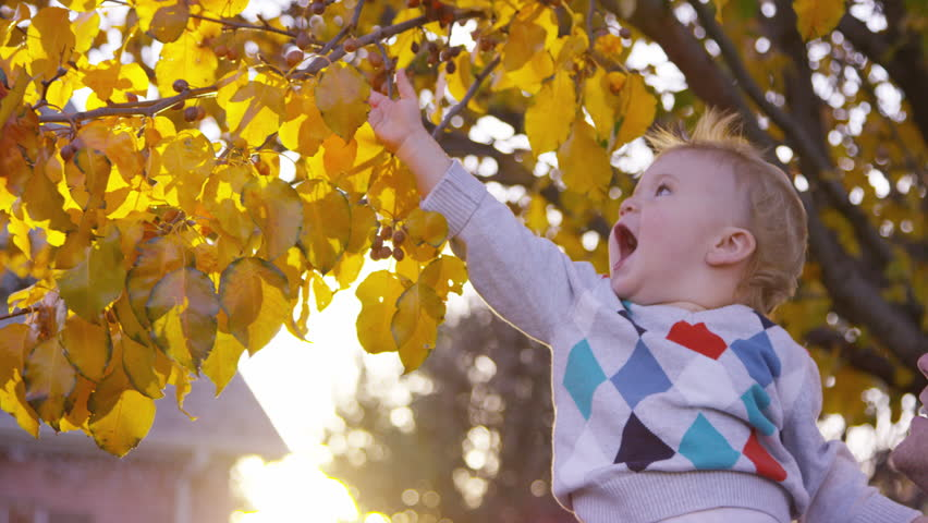 Father lifts up toddler boy so he can look at tree leaves during autumn sunset