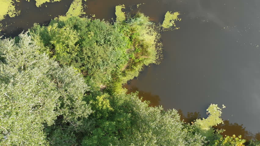 The river bed is a top view from the drone. The quadrocopter is flying over the river in the forest. Nature, green vegetation on the banks of the river. green reeds and trees. Small pond,flows. Summer | Shutterstock HD Video #1015708327