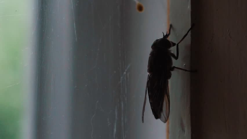 Close up the fly on the window, on the glass, the concept of sanitation, dangerous insects, insect repellent, copy space | Shutterstock HD Video #1015751512