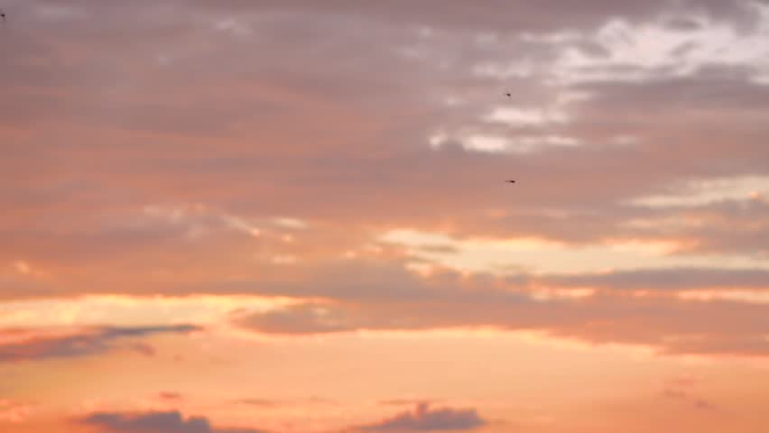 Dragonflies fly against the sunset #1015818973