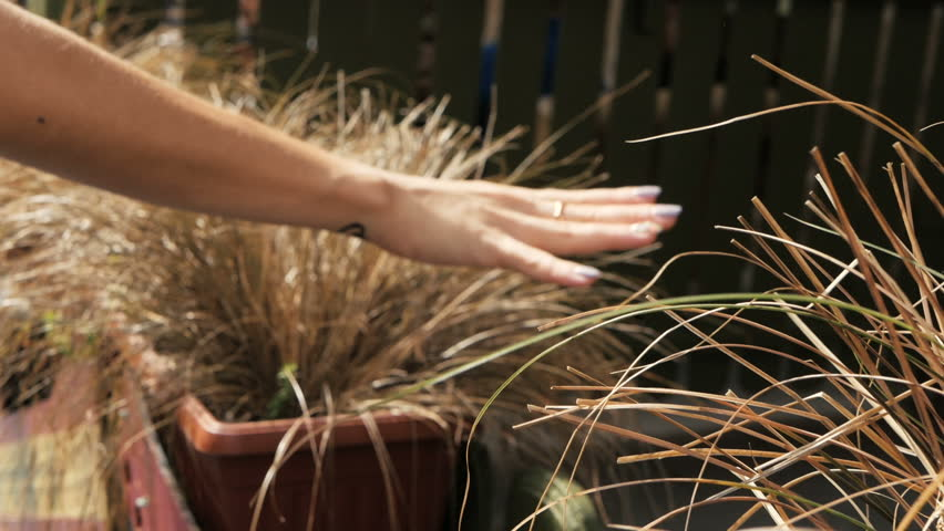 Close-Up Of A Girl's Hand touch Grass on street, nature in town   Shutterstock HD Video #1016053300