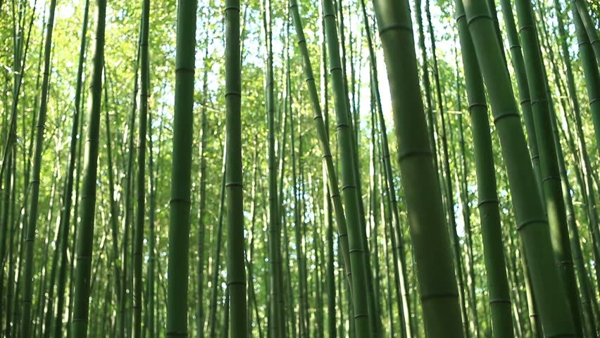 Picture of bamboo forest | Shutterstock HD Video #1016247904