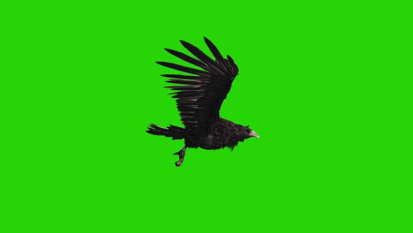 Crow Flies Loop Side Green Screen Halloween Horror 3D Rendering Animation