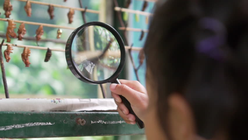 Asian little girl researcher looks at caterpillar on branch through magnifying glass, slow motion