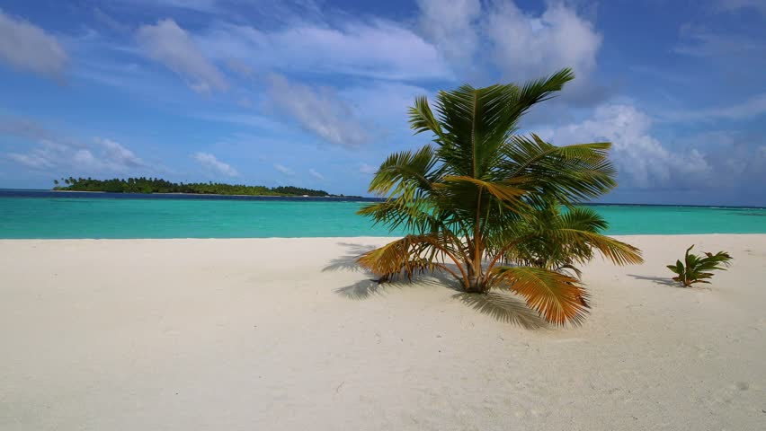 Maldives sandy beach with palm trees. Video in motion. Tropical island.   Shutterstock HD Video #1016583523