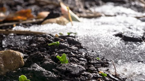 Season change time lapse of snow melting and seeds begin growing and new life emerges.