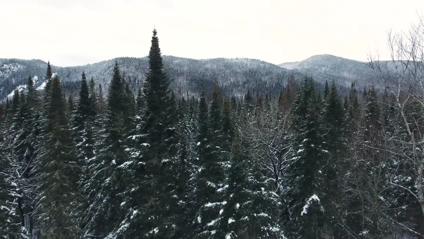 A dark coniferous forest cover with a little bit of snow. Its possible to see a line of mountains in the back. Filmed with a drone during winter in Canada. Royalty-Free Stock Footage #1016788192