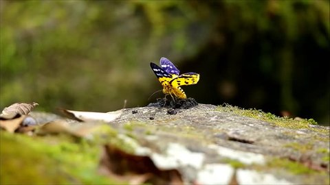 Yellow butterfly on rock