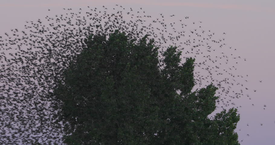 Huge flock of birds flying away from tree | Shutterstock HD Video #1016795041