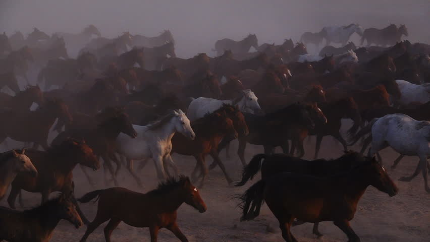 Wild Horses running (s;p-mo) | Shutterstock HD Video #1016869345