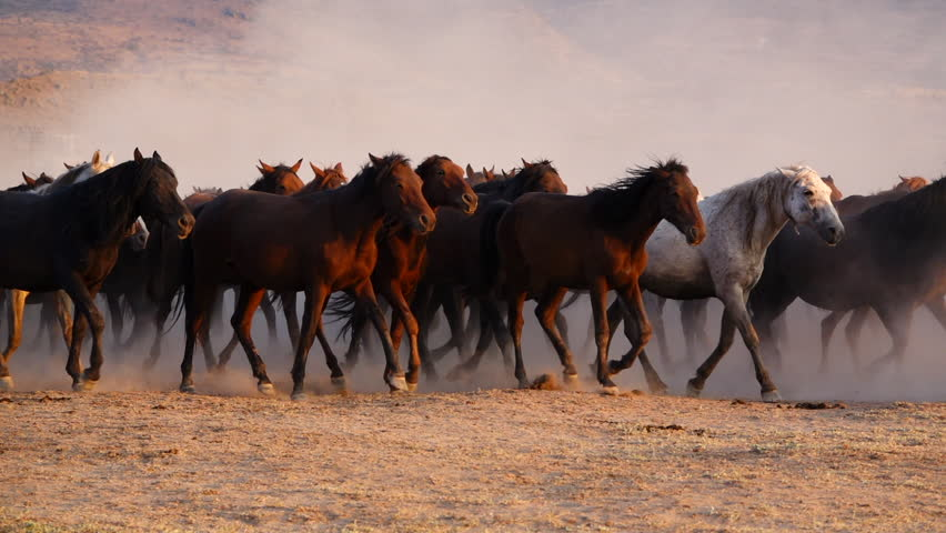 Wild Horses running | Shutterstock HD Video #1016869354
