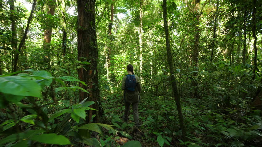 Woman hiking in amazonian forest French Guiana. Beautiful path between trees