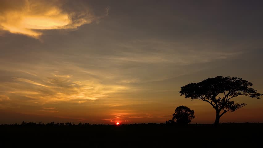 Time lapse Dramatic golden light in africa with sunrise. Silhouetted trees against bonfire-red and sunflame-golden sky.4K  Time-lapse night to day.