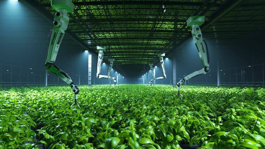 Robotic arms looking after fresh, young, green plants in a vast, modern, foggy greenhouse. Soft, cold spotlights illuminate the leaves revealing their natural, vibrant, healthy color.  | Shutterstock HD Video #1017012433