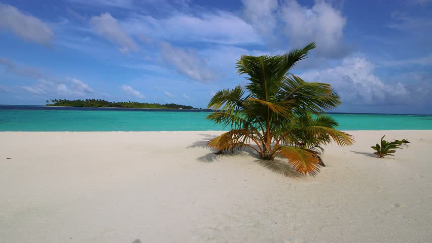 Maldives sandy beach with palm trees. Video in motion. Tropical island.   Shutterstock HD Video #1017064990