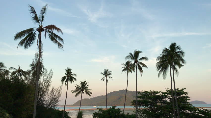 Beautiful seaside landscape featuring many palm trees. Phuket, Thailand. | Shutterstock HD Video #1017349813