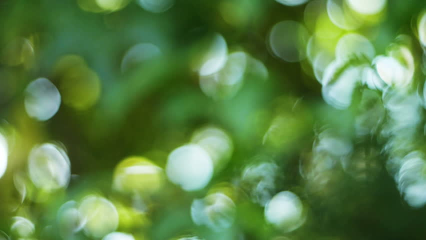 Beautiful nature green bokeh sunshine abstract blurred background, foliage plant leaves shadow swaying in the wind with sunbeam and sun flare.