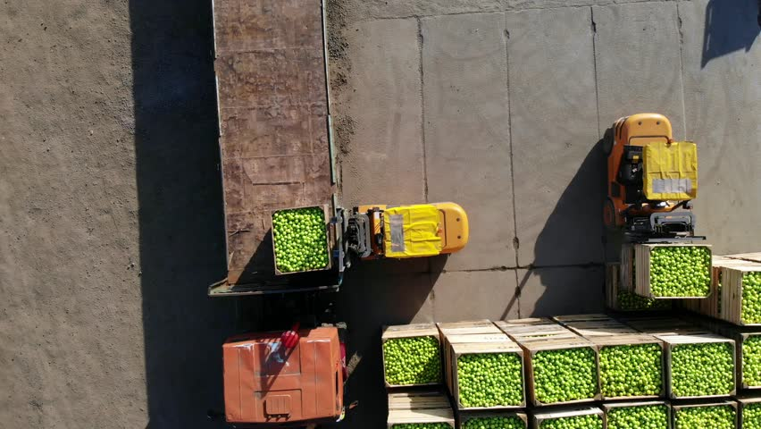 harvest of apples, small loaders, forklift trucks, machines load a big truck, wagon with large wooden boxes full of green apples . top view, aero video.