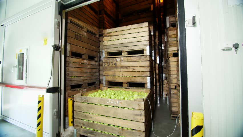 Fresh harvested Apples in a Storage Compartment, a special storage room in warehouse. tightly spaced many large wooden boxes full of green apples. apple storage technology