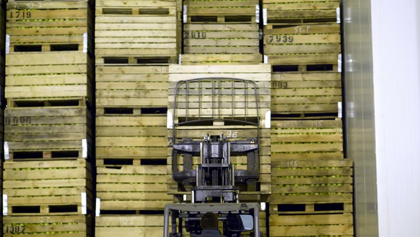 A special machine, loader, forklift truck puts large wooden boxes with apples on top of each other, in a special storage room in warehouse.