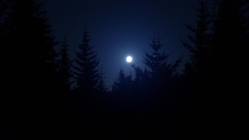 Bright hazy blue moon over dark pine tree forest silhouettes.