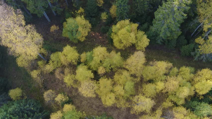Flying fast directly above colorful autumn forest | Shutterstock HD Video #1017852211