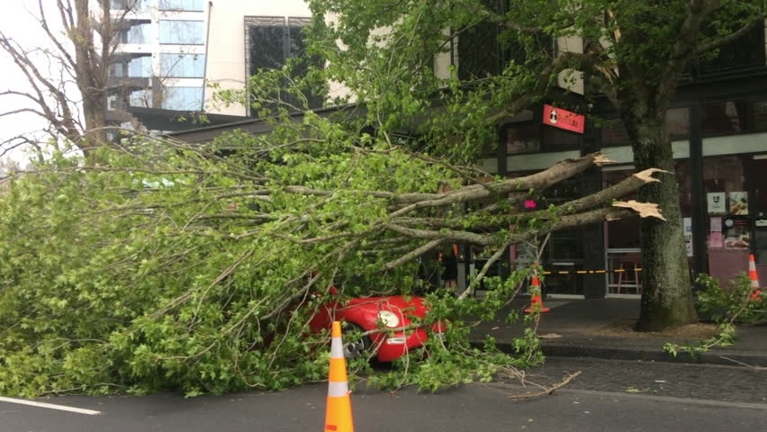 AUCKLAND - OCT 12 2018:Blowdown tree crashed on a car in Queen Street due to a very high winds and bad weather in Auckland, New Zealand.