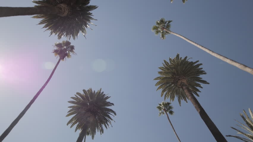 Slow drive through a street lined with palm trees in Beverly Hills, Los Angeles, California. Look up at palm trees against blue sky. Slow Motion.  Royalty-Free Stock Footage #1017961639