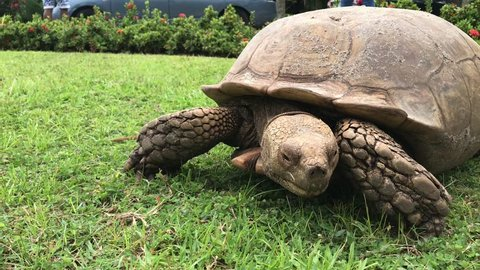 Tortoise close shot